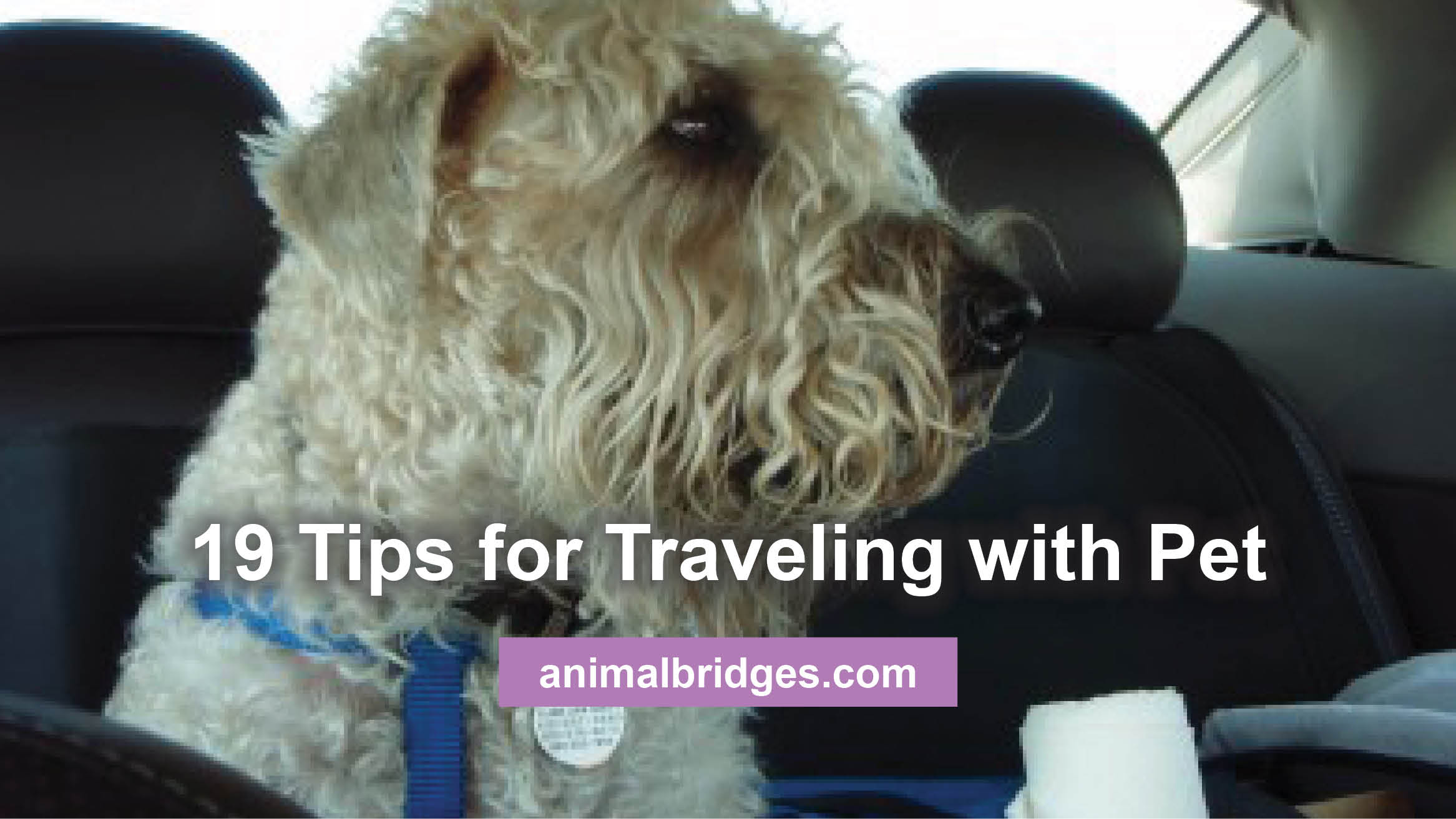 Traveling with pet tips