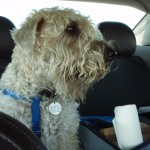 19 tips for traveling with pet