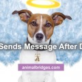 dog-send-message
