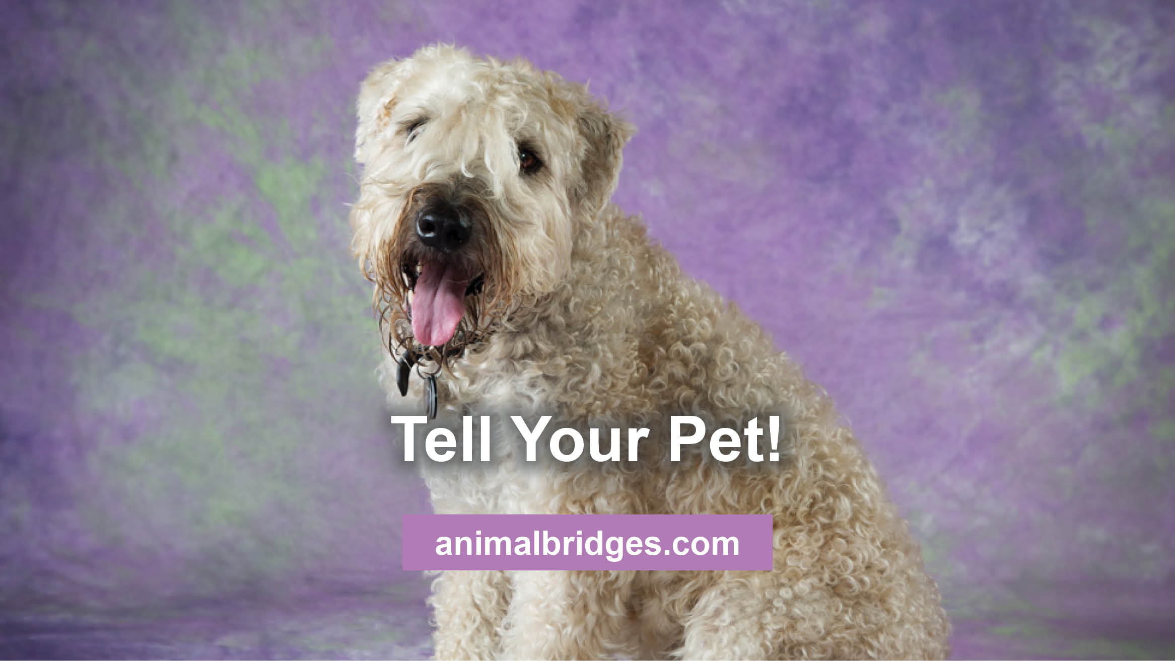 tell-your-pet