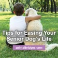Tips for easing your senior dog's life