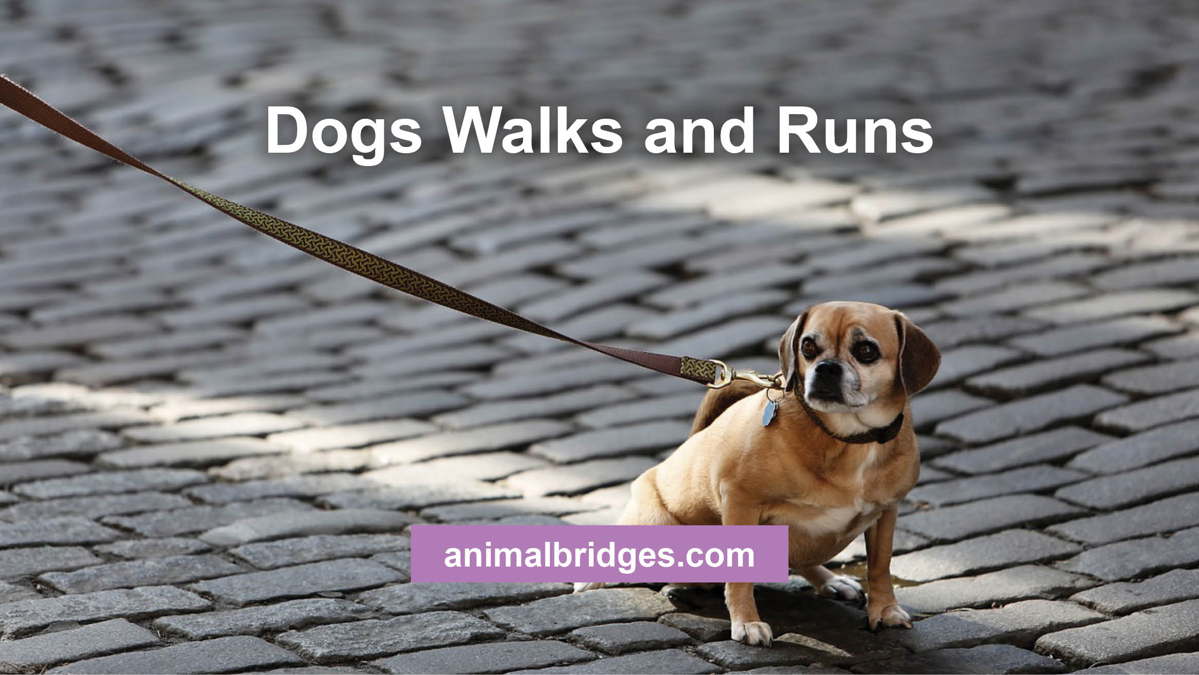 Dogs walks and runs