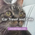 car-travel-and-cats