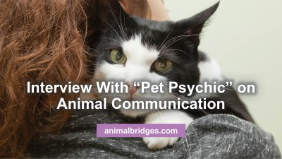 pet-psychic