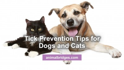 tick-prevention