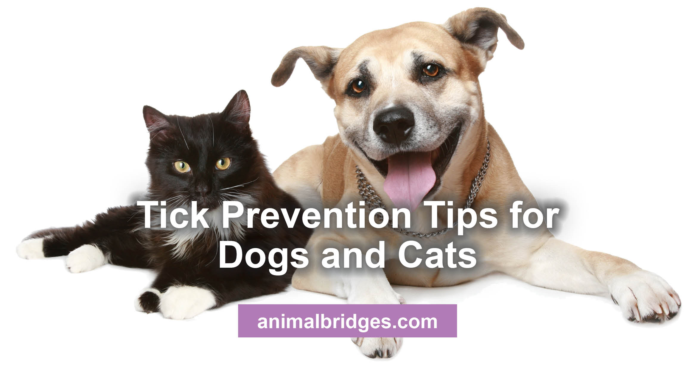 Tick Prevention Tips for Dogs and Cats