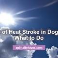 heat-stroke
