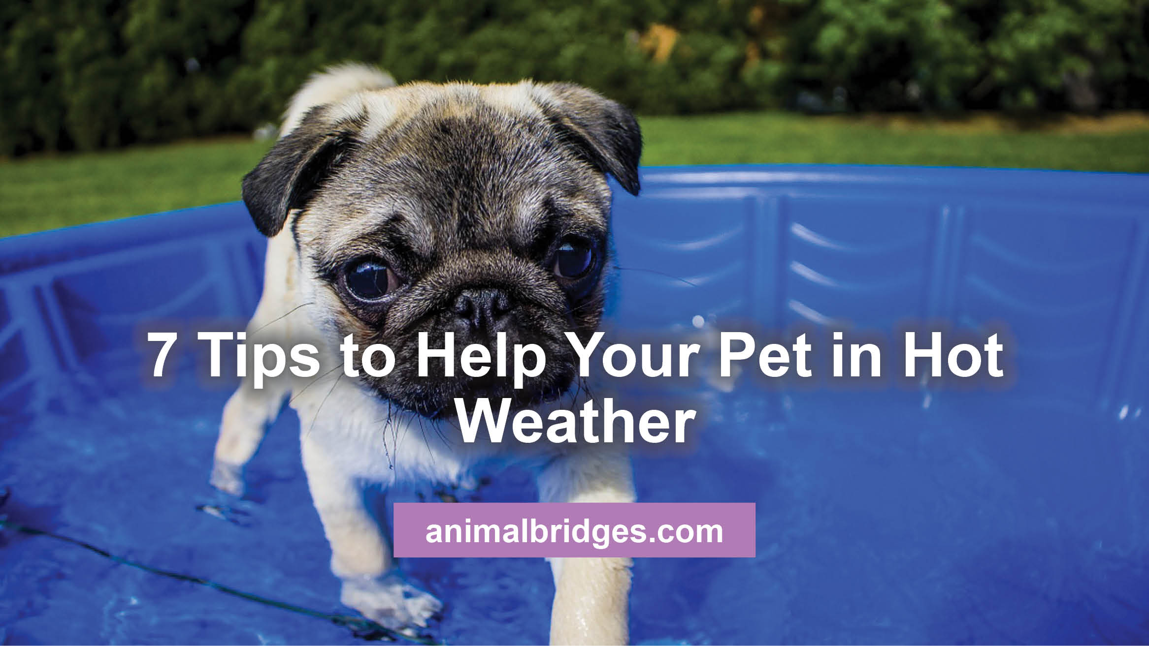 7 Tips to Help Your Pet in Hot Weather