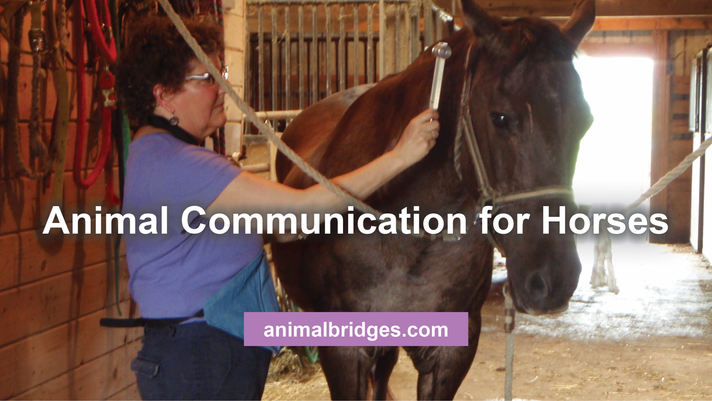 Animal Communication for Horses