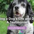 honoring-dog