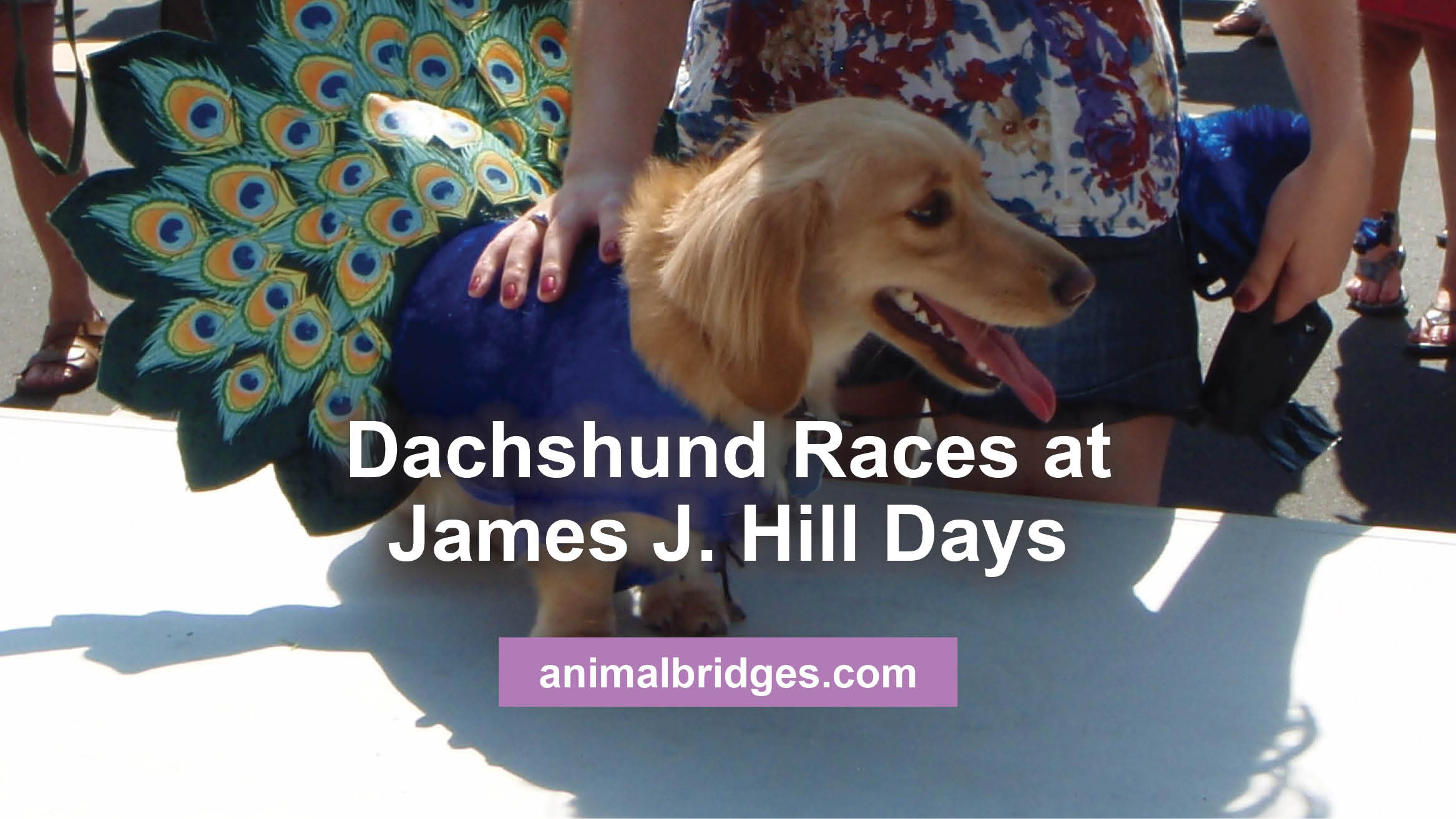 Dachshund Races at James J. Hill Days 2013 in Wayzata, MN