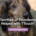 Dog terrified of thunderstorms