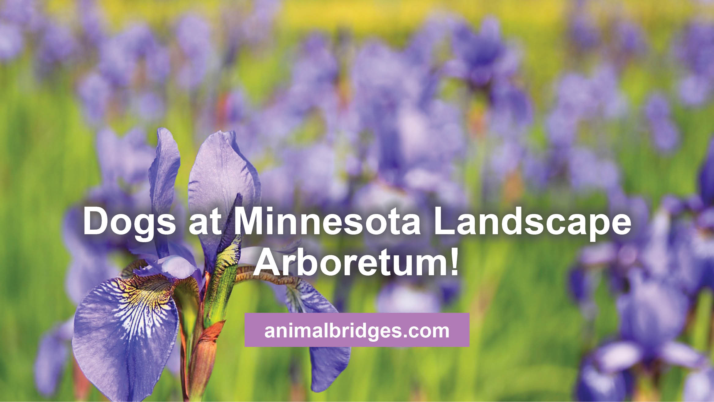 Dogs at Minnesota Landscape Arboretum!