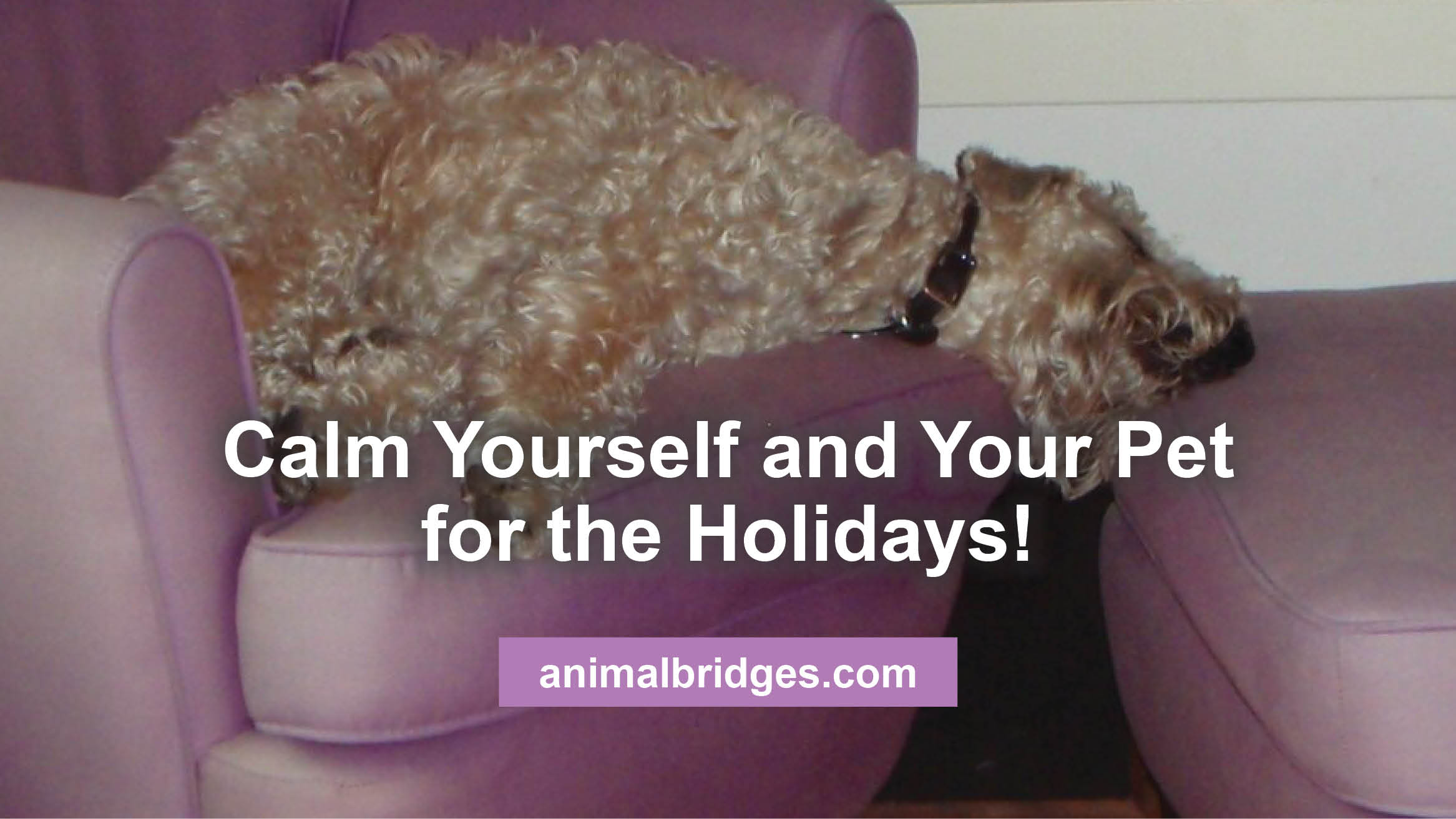 calm-yourself-and-pet