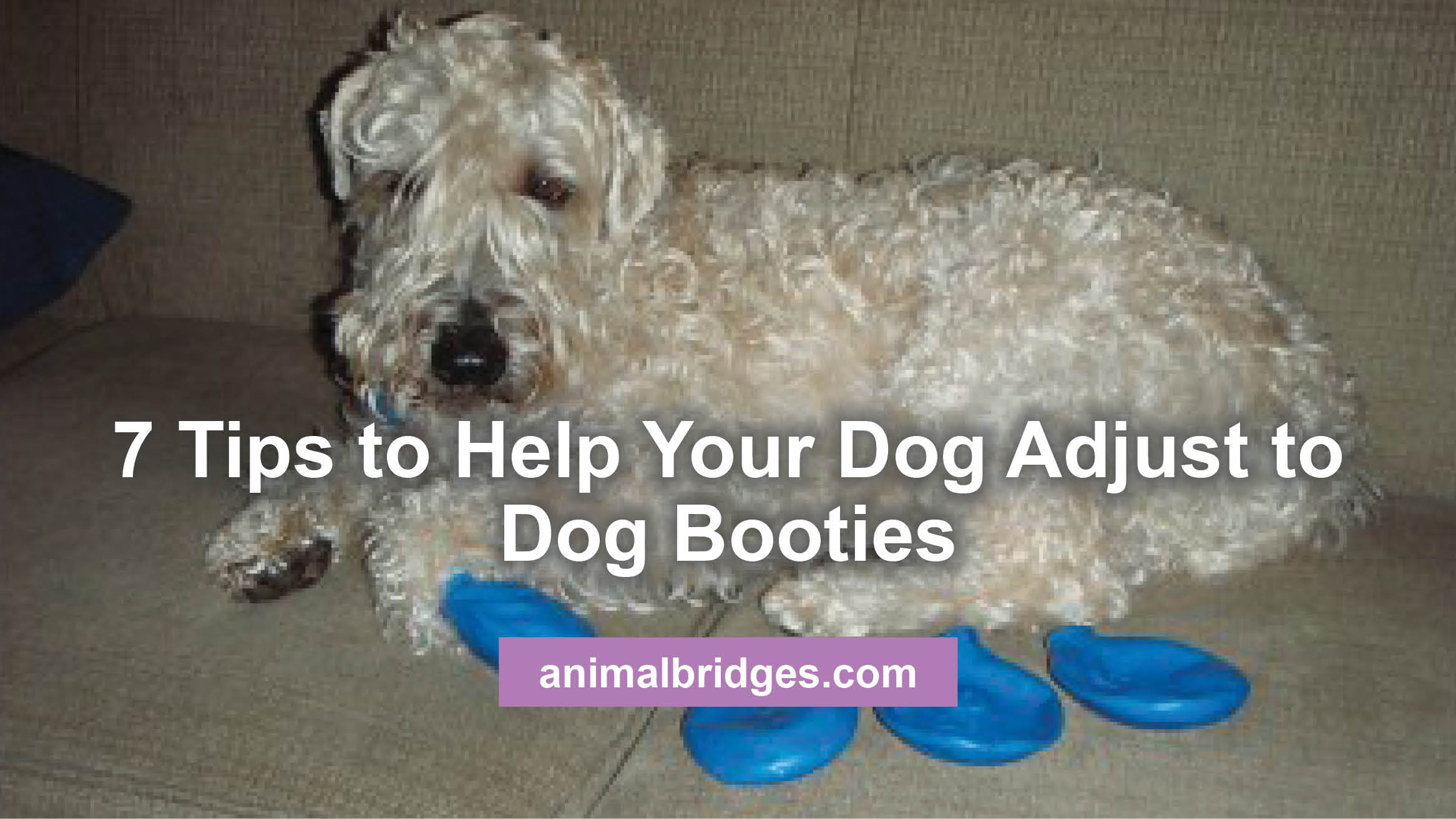 dog-booties