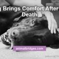 dog-brings-comfort