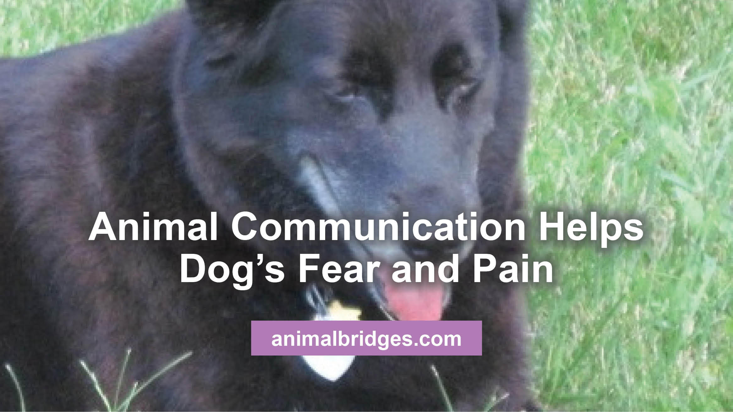 dogs-fear-and-pain