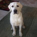 My dog is sick. Can Animal Bridges do energy work?