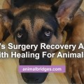 dogs-surgery