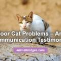 Outdoor cat problems