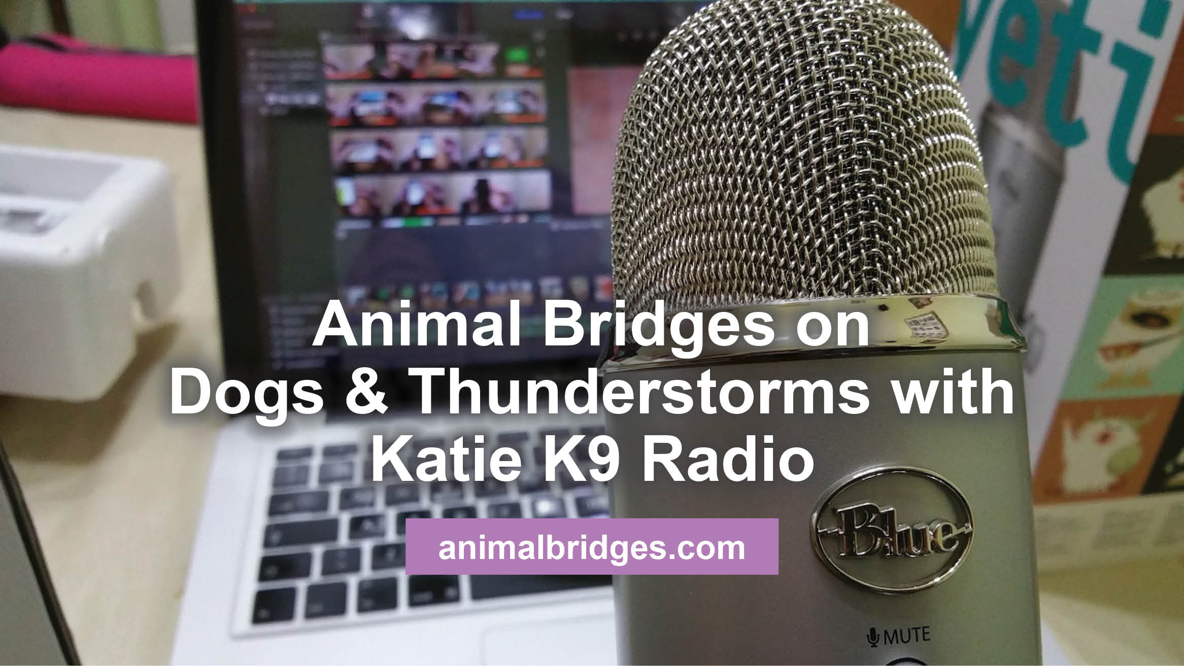 Animal Bridges on Dogs & Thunderstorms with Katie K9 Radio