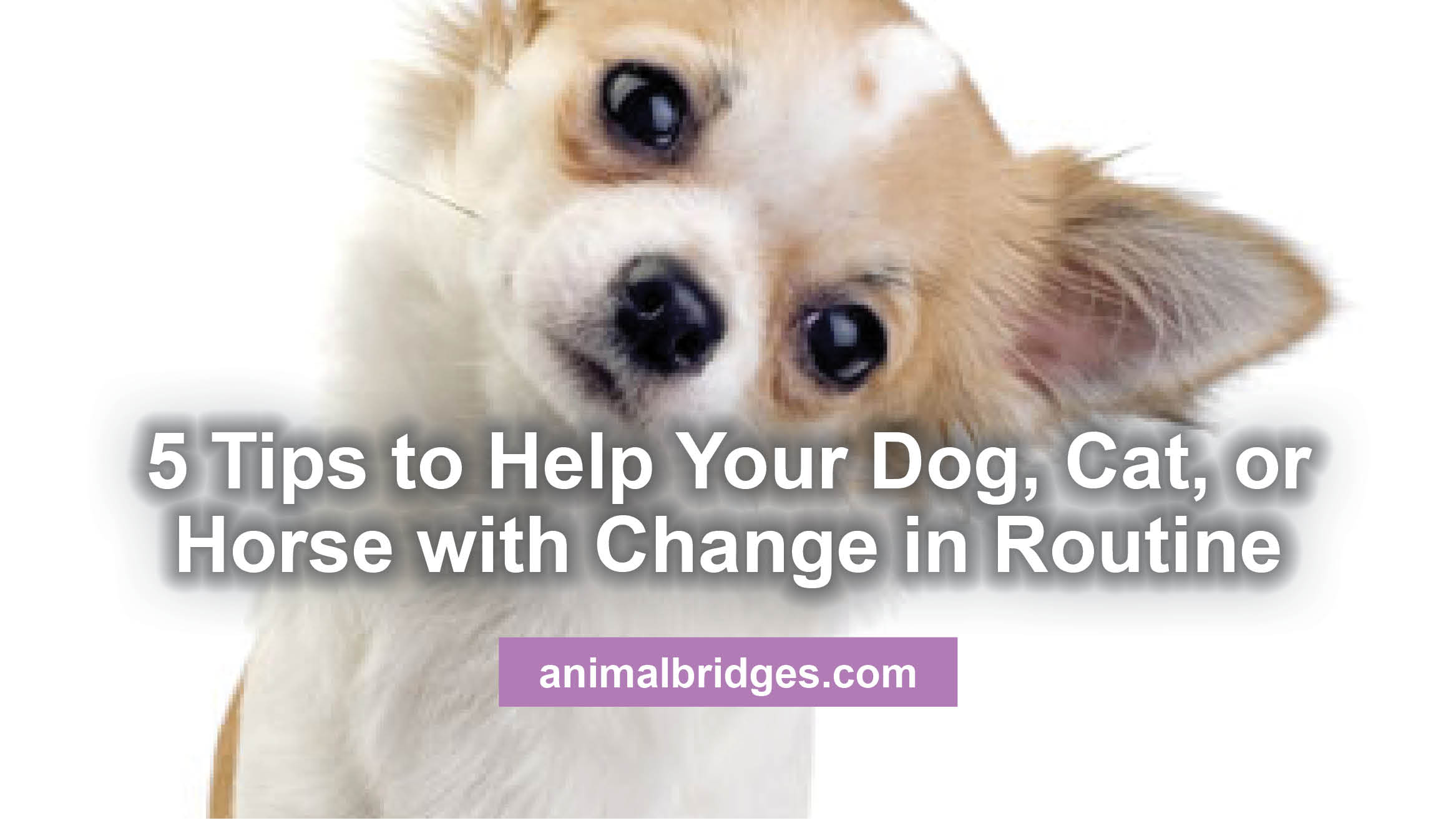 Help Your Dog, Cat, or Horse
