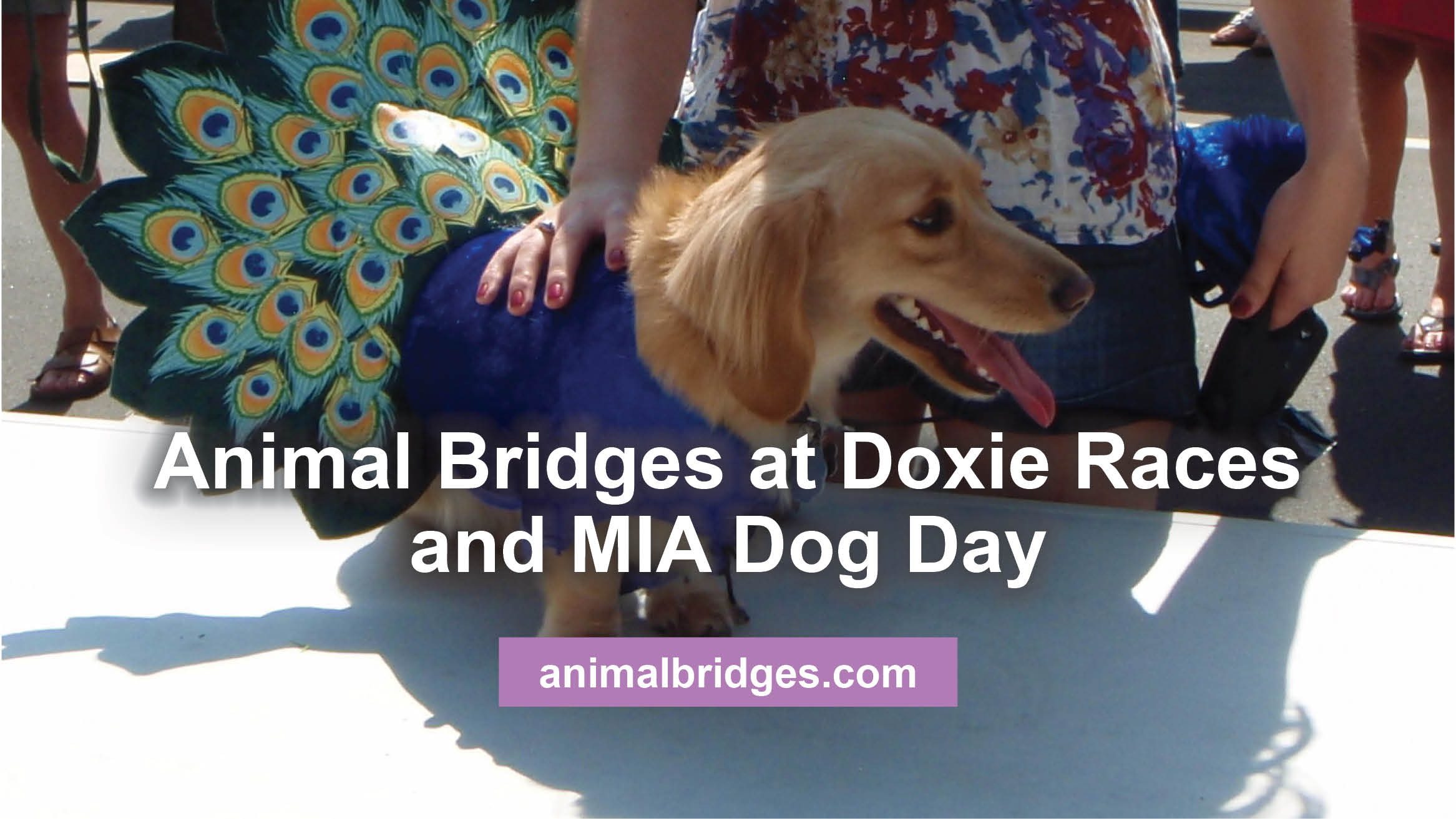 Animal Bridges at Doxie Races and MIA Dog Day