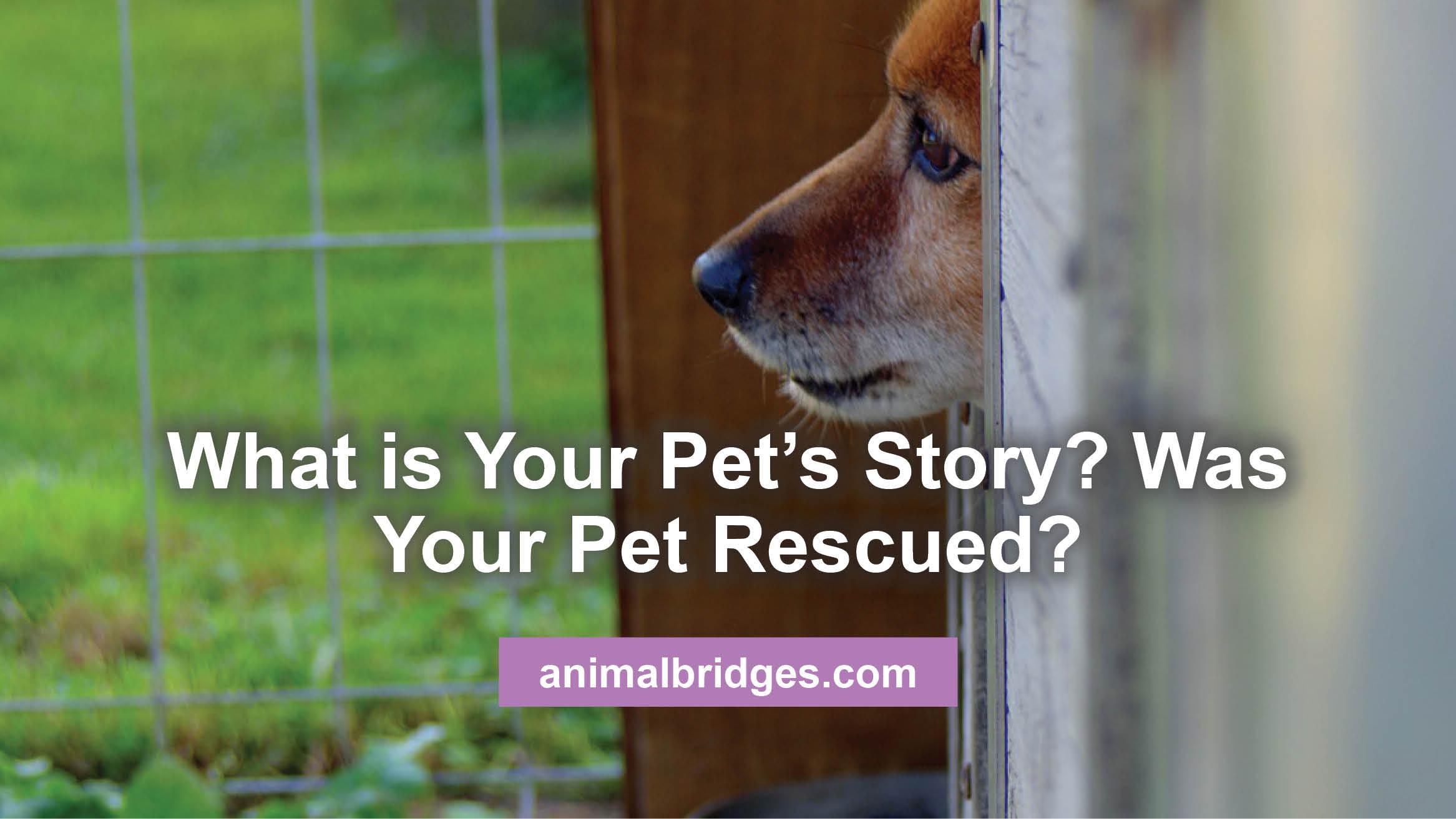 pets-story