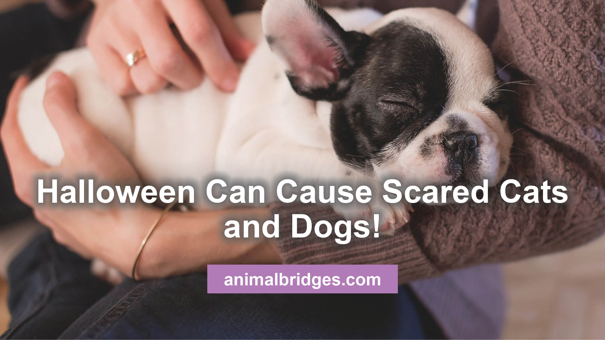 scared cats and dogs