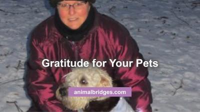 gratitude-for-pets