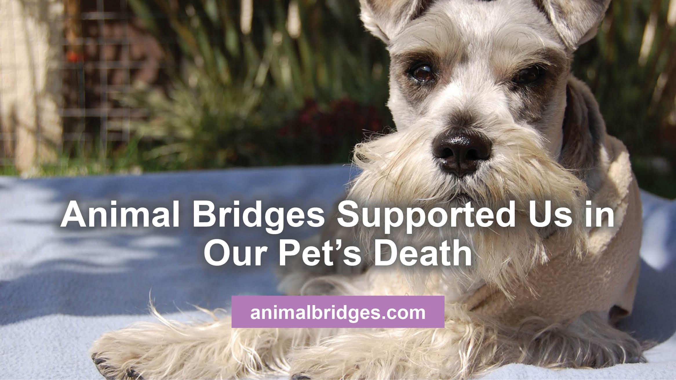 pets-death