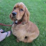 Sammy, the Dog