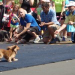 Doxie Dash Finish Line