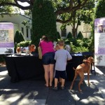 Animal Bridges at MIA Dog Day