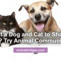 Cat and dog share a home