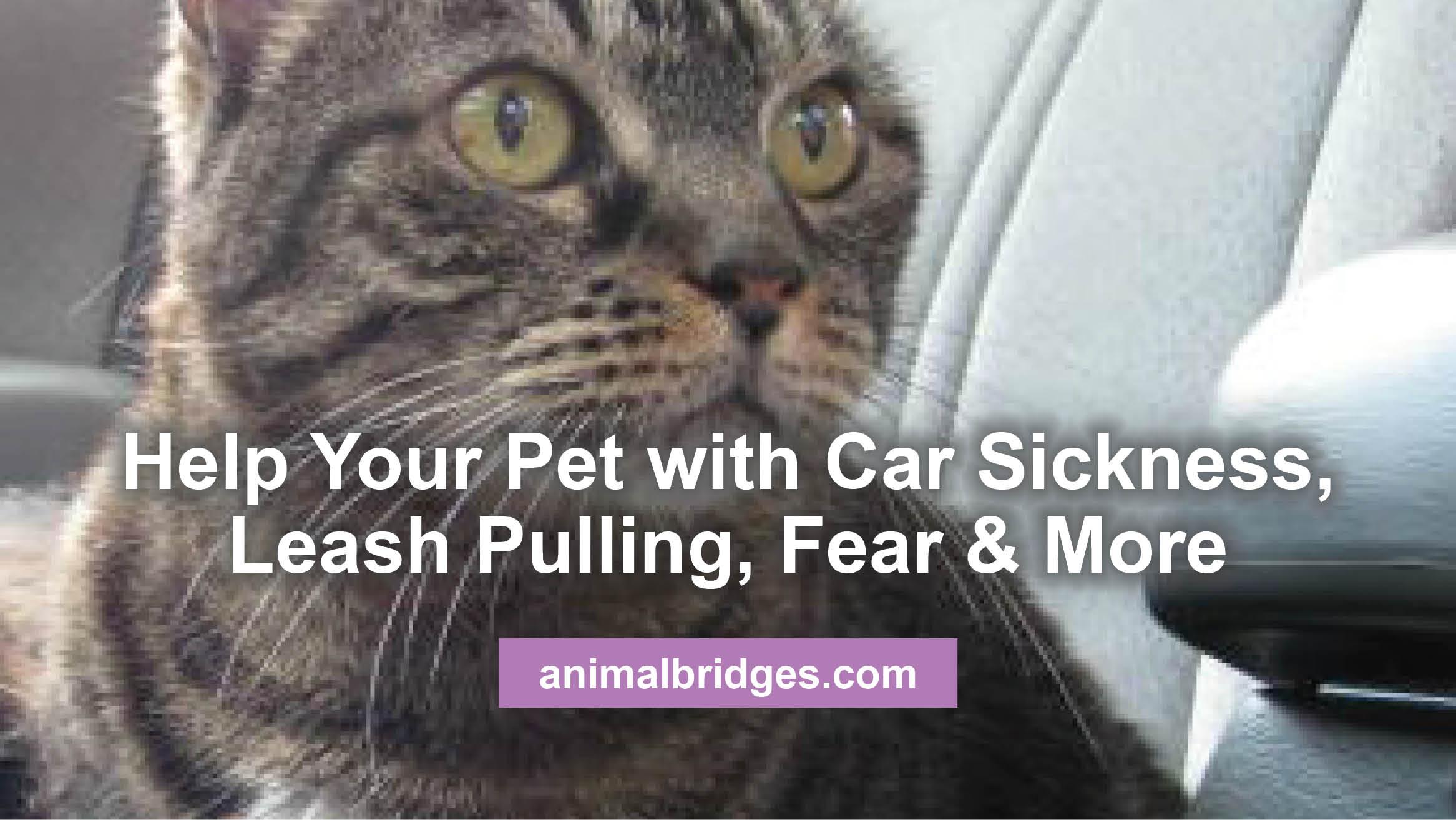 help-your-pet
