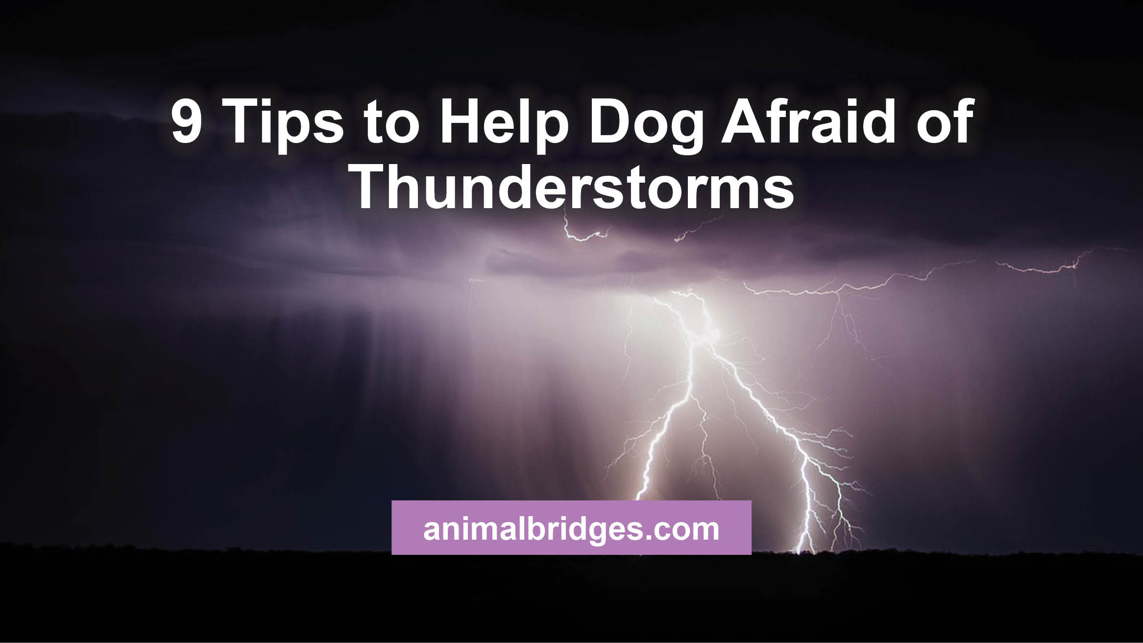 9 Tips to Help Dog Afraid of Thunderstorms
