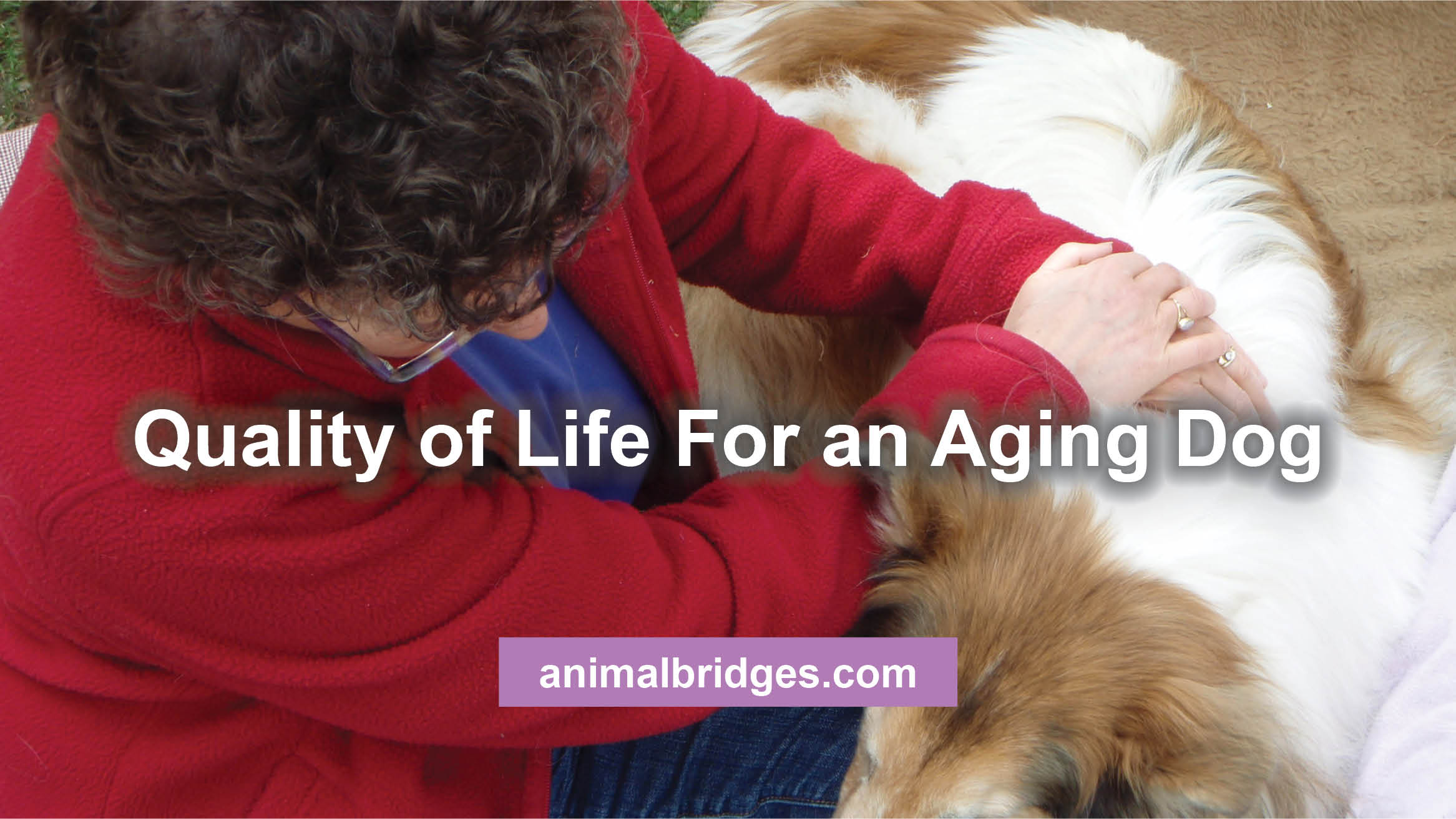aging-dog
