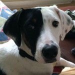 Why dog always hungry? Gerty tells in an animal communication.