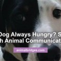hungry-dog