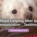 limping-dog