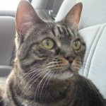 Animal communication helps cat owner know to take cat to the vet