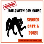Halloween Can Cause Scared Cats and Dogs