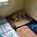 Hobbes' recovery room after dog ACL surgery