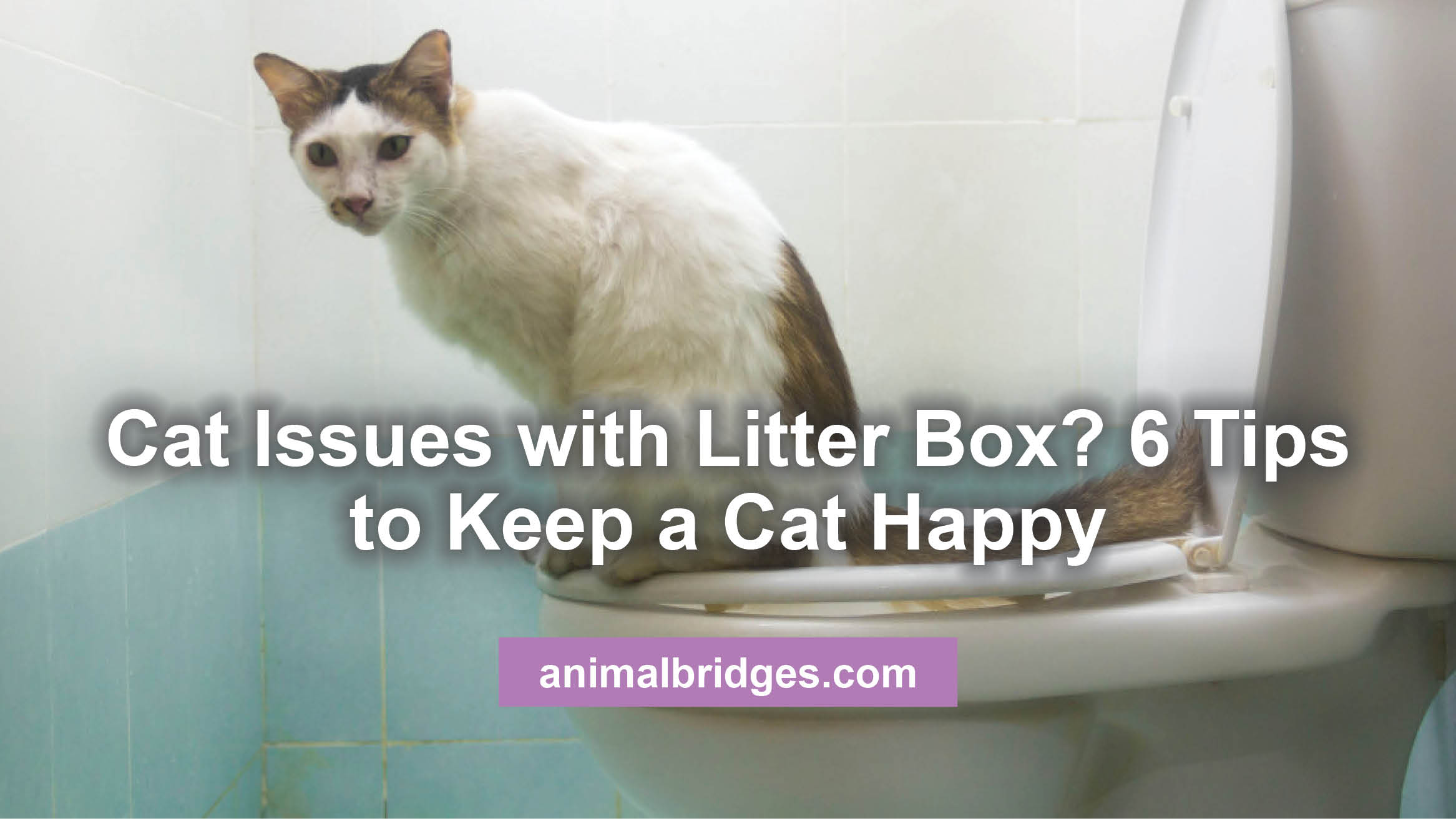 Cat issues with litter box