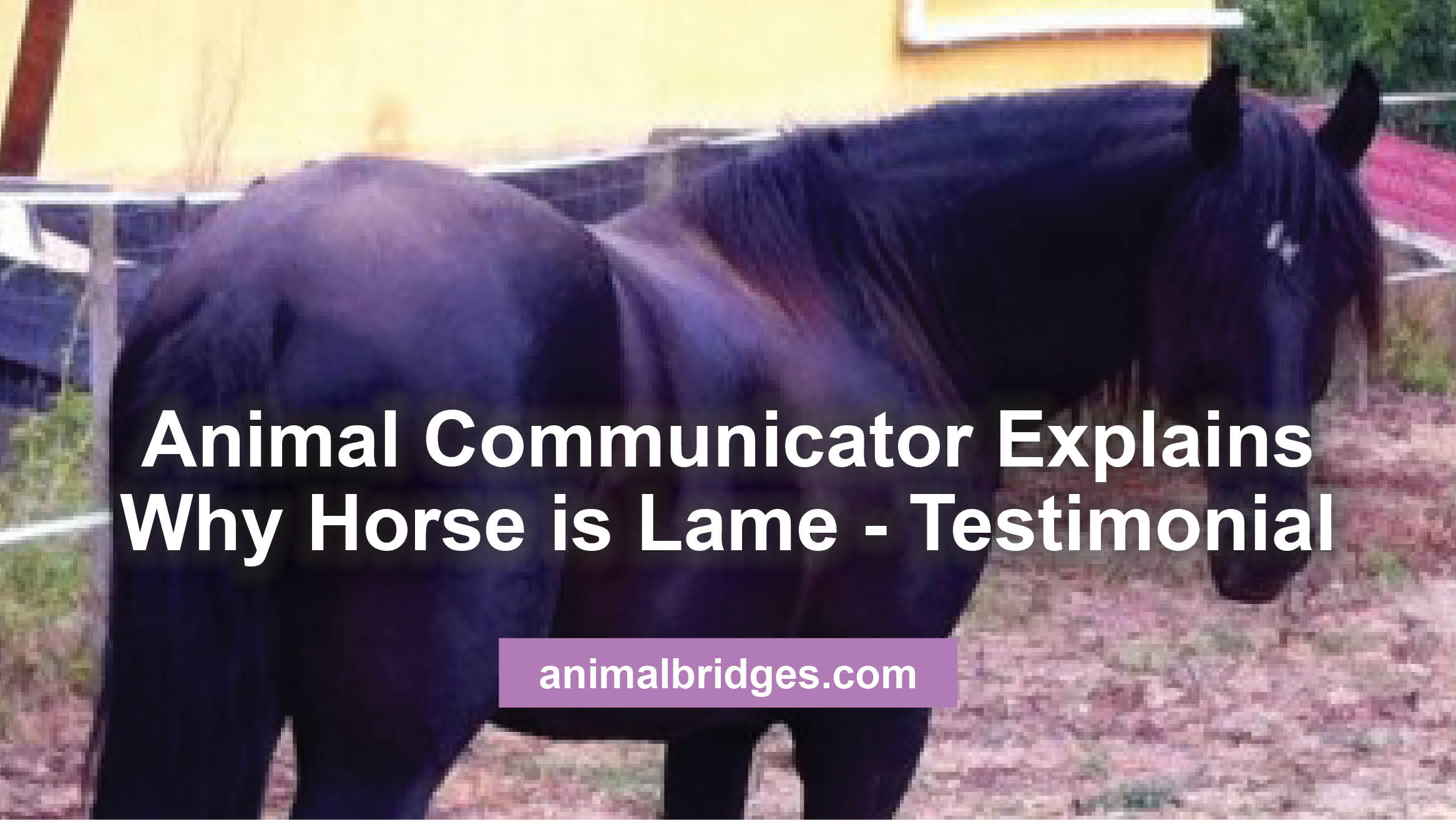 lame-horse