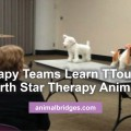 therapy-teams