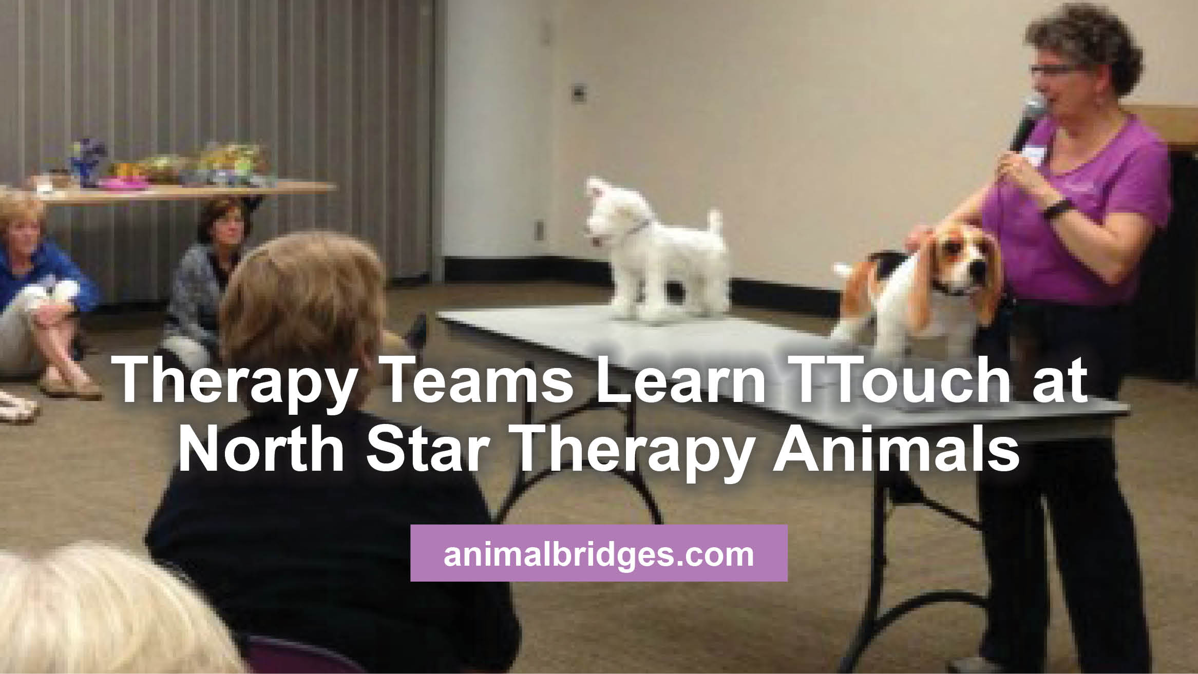 Therapy Teams Learn TTouch at North Star Therapy Animals