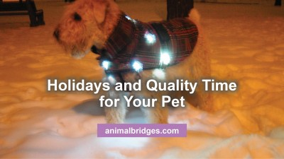 holidays-and-your-pet