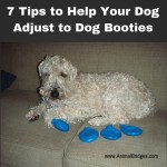 7 Tips to Help Your Dog Adjust to Dog Booties